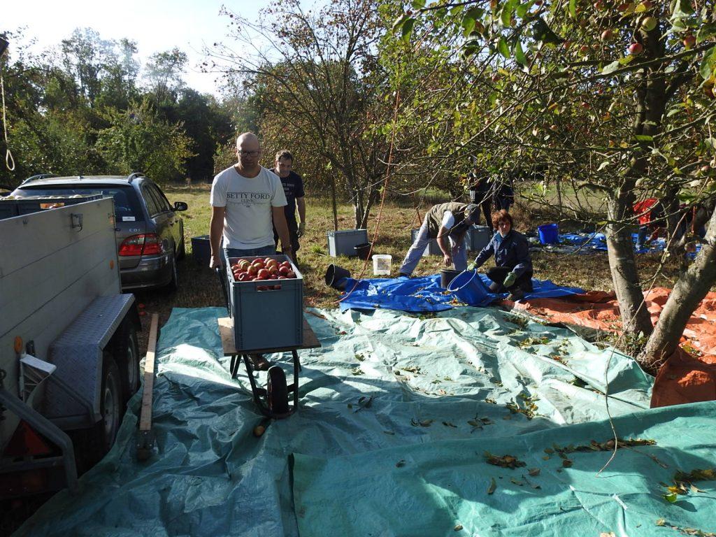 Schubwagen mit voller Apfelbox