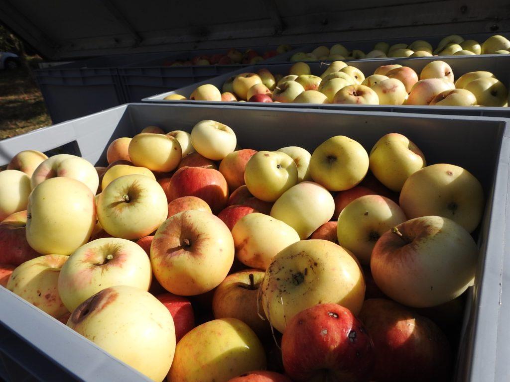 Volle Apfelboxen