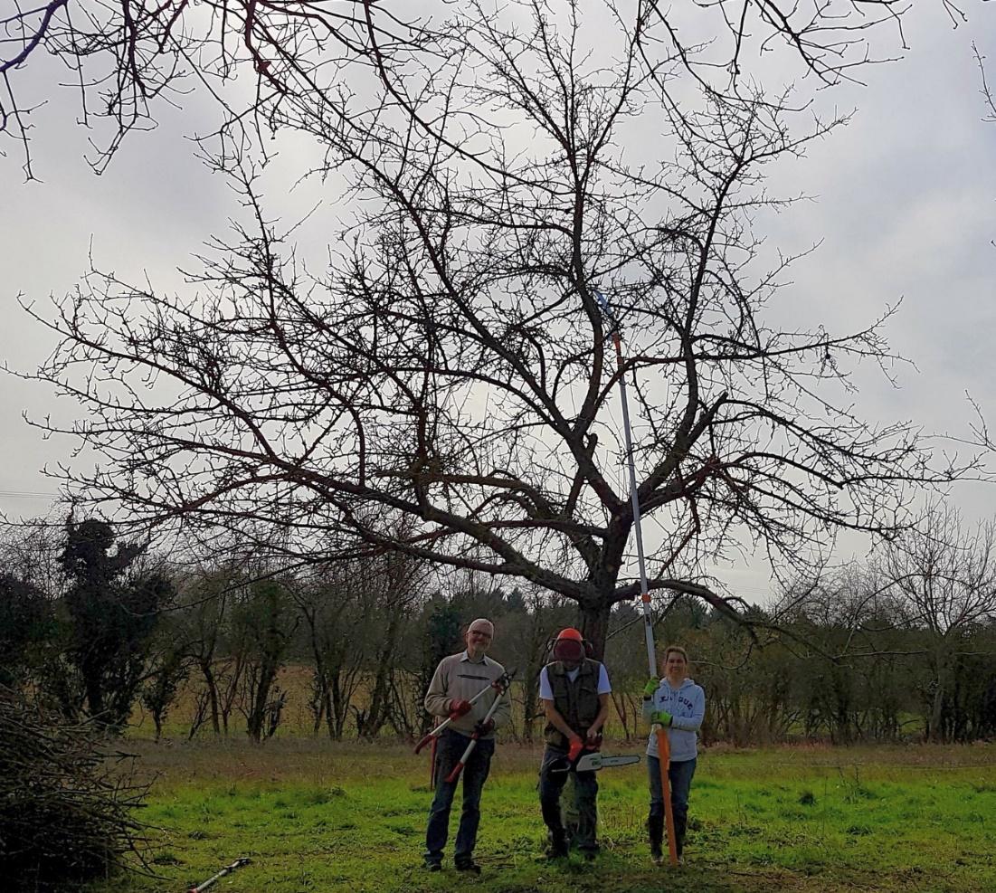 Baum nach dem Schnitt